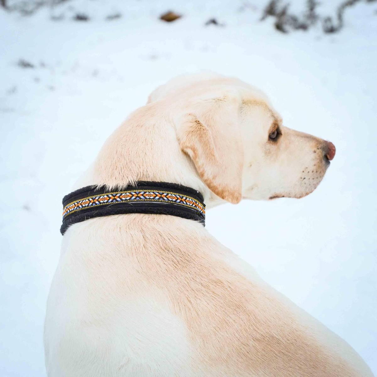 Halsbånd hund